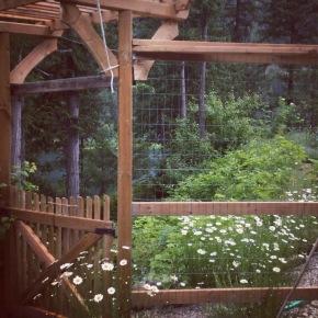 homestead: garden bounty
